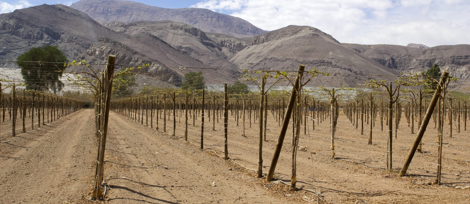 Vineyard cultivation for fruit and wine, in the inhospitable mountains of the Andes. Chile