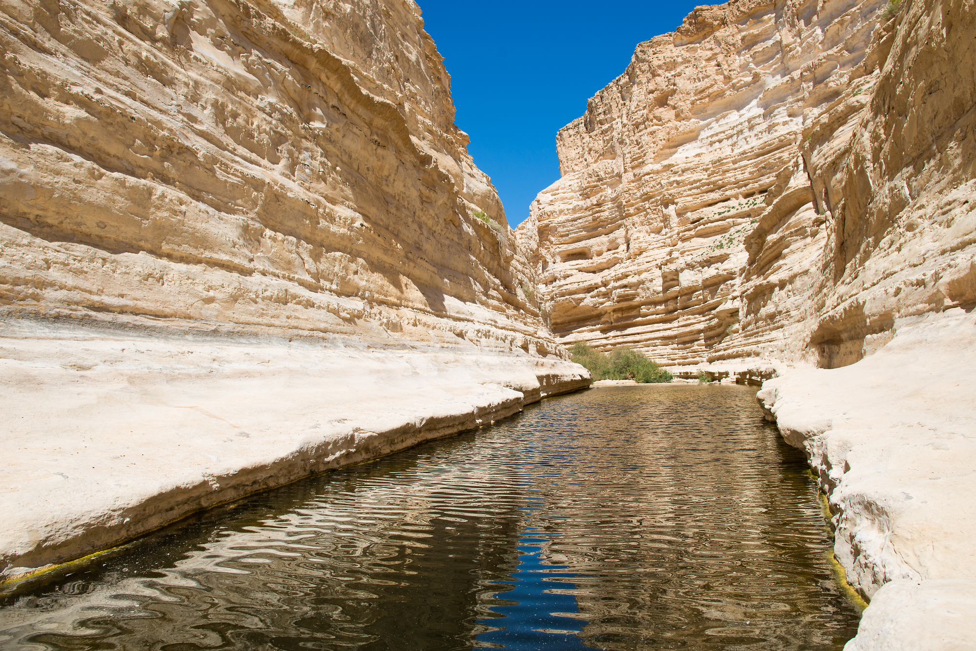 Canyon Ein-Avdat in the Negev desert. Fresh water flowing in the river canyon. Sandstone walls.
